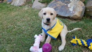 Little Leona V, an exceptional dog